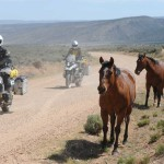Wild Horses on the Arizona Backcountry Discovery Route (AZBDR)