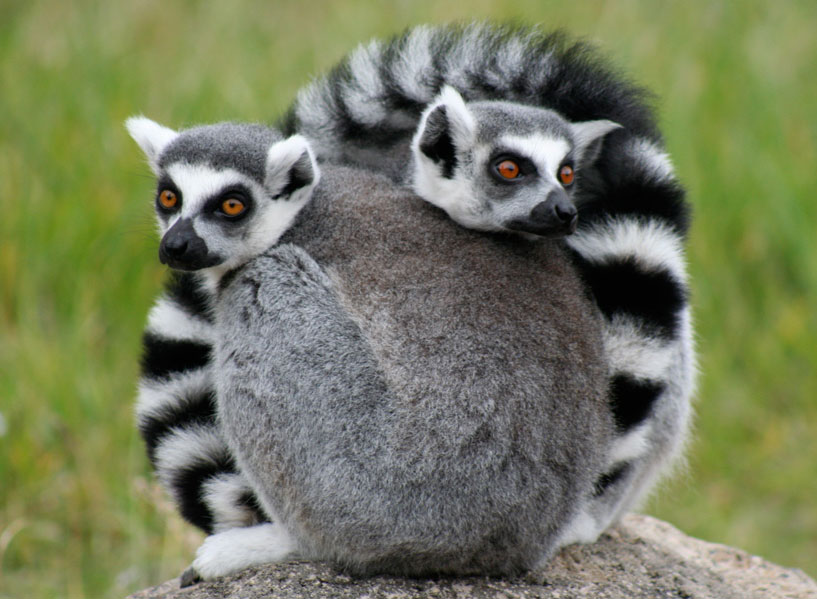5 Stories of Adventure in the Land of the Lemurs - ADV Pulse