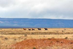 Wild Horses AZBDR