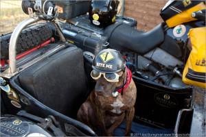 Ride motorcycle with dog