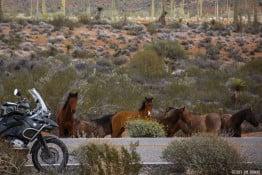 Wild horses on Baja Motorcycle tour