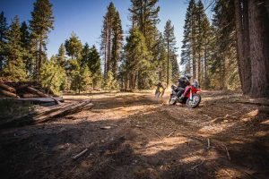 Riding the Sequoia National Forest on small bikes.