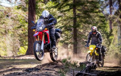 Ride with the giant sequoias of California
