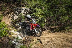 Single track trails of the sequoia national forest