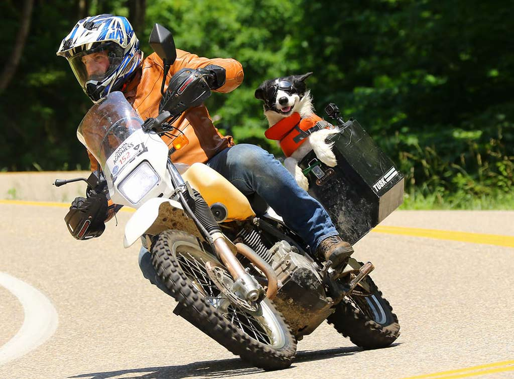 These Moto Dogs Can't Get Enough Adventure On Two-Wheels ...