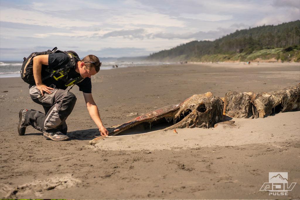 Dead whale on the beach.